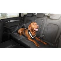 Original Audi Hundeschutzgurt Hundegeschirr Hundegurt